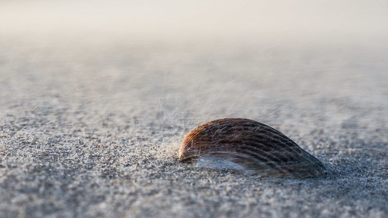 Seashell and blowing sand