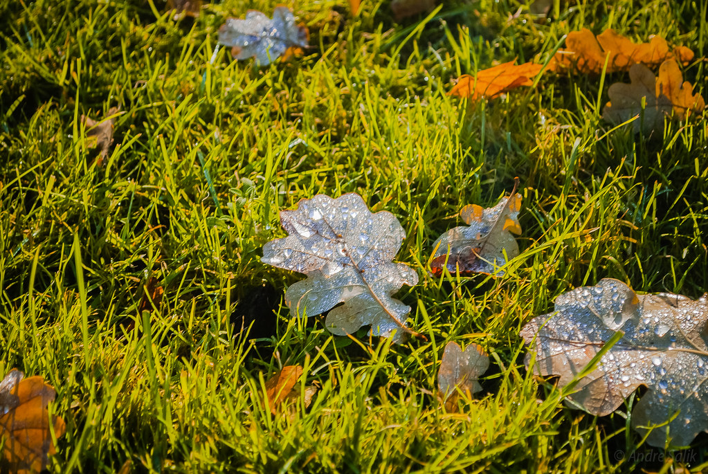 Lovely Autumn find 11:51:14   DSC_0086