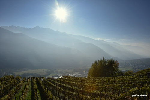 1-DSC_1788 shining over the blessed grapevines and mountains of Valtellina...