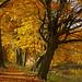 Autumn in Winequarter 16.05
