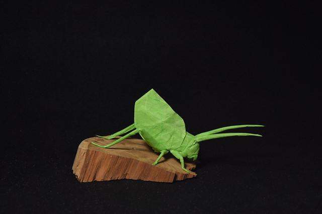 Leaf katydid - Brian, Nikon D3300, AF-S DX Zoom-Nikkor 18-55mm f/3.5-5.6G ED II
