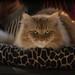 Catillack the Cat by David McCudden