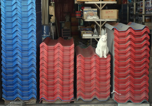 cat on roof tiles at a construction materials store