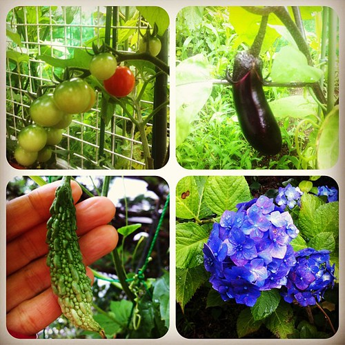 Mom's veggies:) 062813 #mymomisgreat