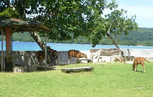 Moluques13-Kota Saparua-Guesthouse (5)