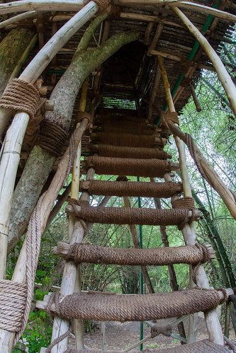 Staircase to treehouse