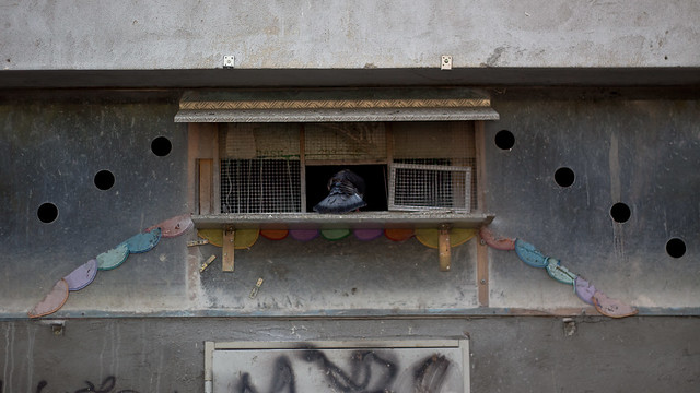 Taubenschlag - pigeon loft