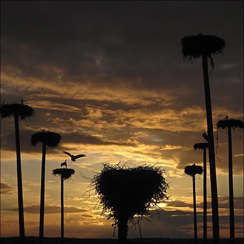 night clouds contraluz atardecer cloudy cielo nubes cáceres cigüeña nwn ciconia malpartidadecáceres nidos mygearandme mygearandmepremium mygearandmebronze mygearandmesilver mygearandmegold