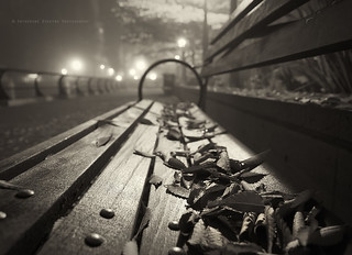 Scattered leaves on a bench