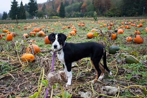 pumpkin patch 2013 4.jpg