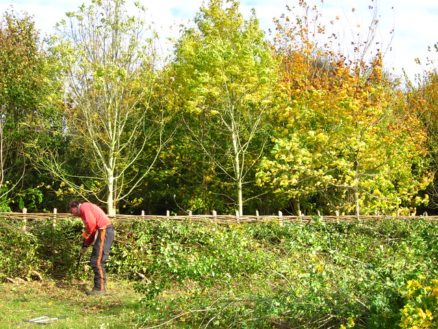 35th National Hedgelaying Championships