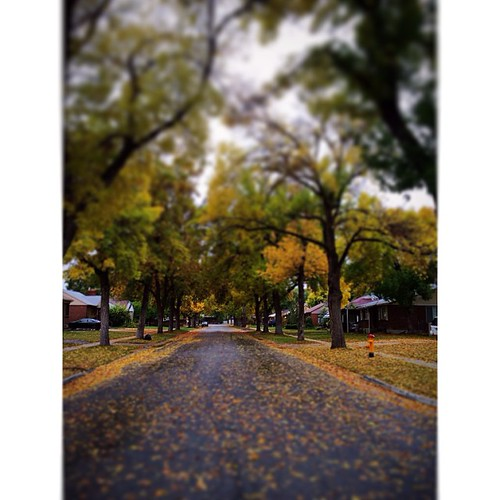 October is truly amazing.  Please don't tell me you're getting sick of autumn pictures yet.  #tmsfall13