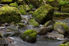 stream, water, river, creek, body of water, watercourse, forest, landscape, stream bed, vegetation, rock, moss,
