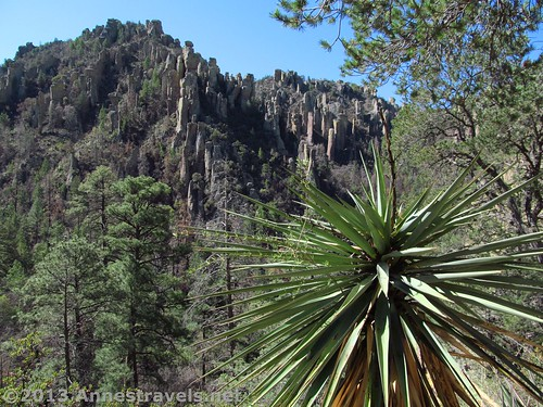 Yucca and spires on the Ed Riggs Trail, Chiricahua National Monument, Arizona