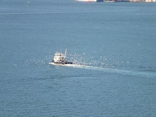 A hajó, amiért nagyon lelkesednek a sirályok