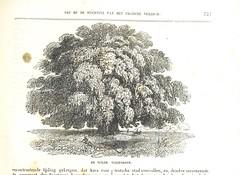 """British Library digitised image from page 825 of """"Algemeene Geschiedenis der wereld van de Schepping tot op den tegenwoordigen tijd (oorspronkelijk en naar de beste bronnen bewerkt door M. S. Polak), etc. Deel. 1-7"""""""