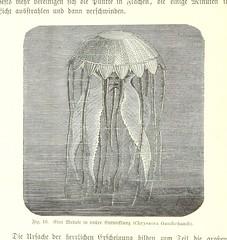 """British Library digitised image from page 104 of """"Nach Ecuador. Reisebilder ... Zweite, vermehrte Auflage. Mit ... Holzschnitten, etc"""""""