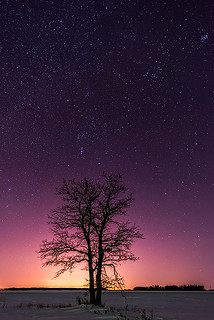 The Orion Tree