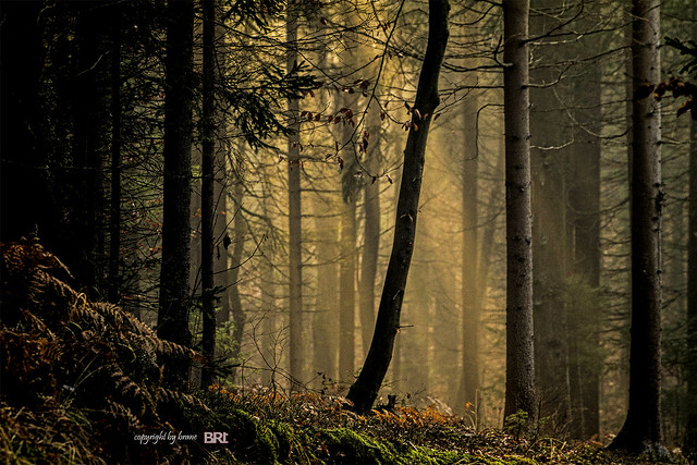 forest_light