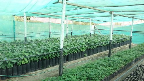 Greenhouse at Huancano Yachaywasi