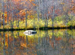 Pretty Autumn Rock