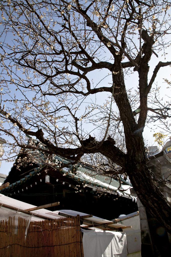 湯島天滿宮4