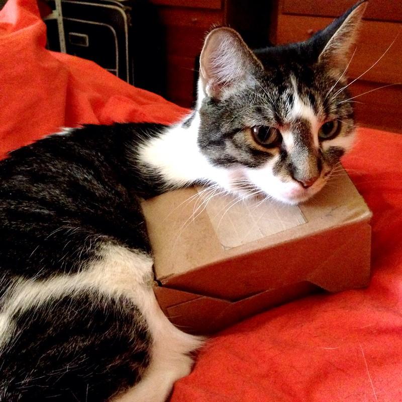 big cat, tiny box