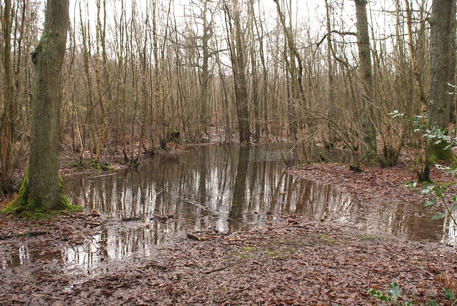 DSC_7761 Woodland floods