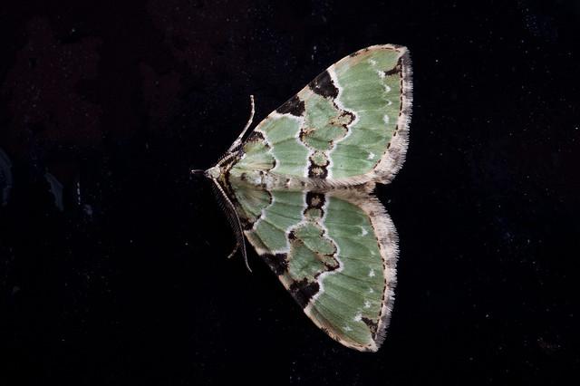 215: Green Carpet
