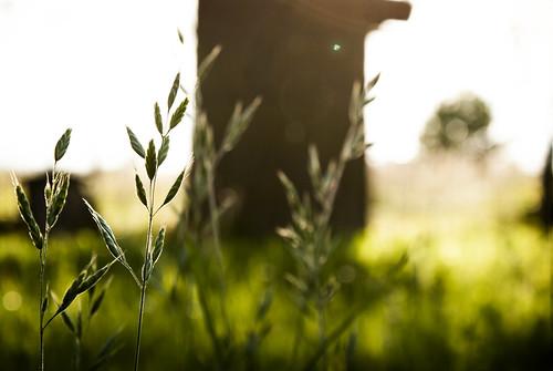 flowers sunset white flower green grass yellow sundown naplemente virág fű