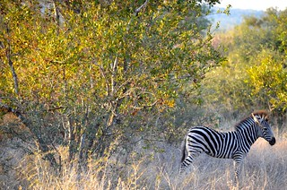 Singita Lebombo Safari Review