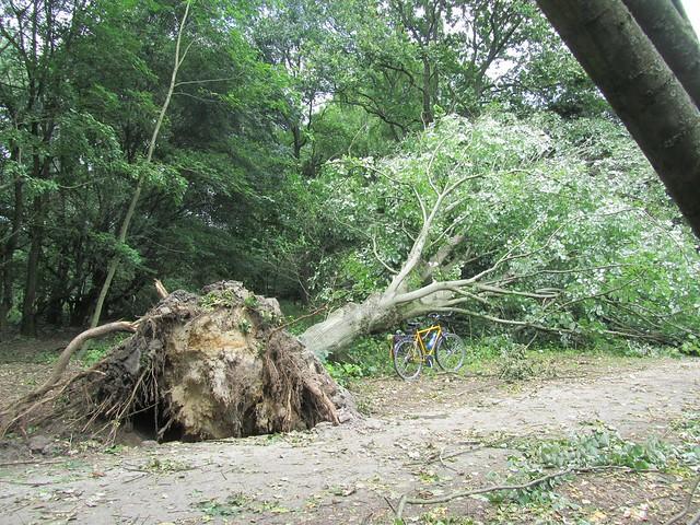 oder einfach umgefallene Bäume