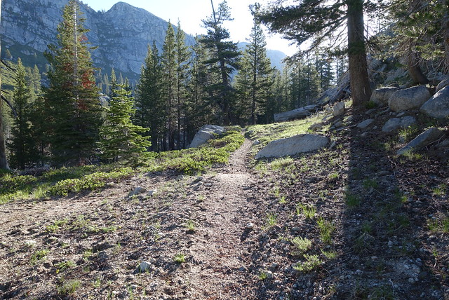 Trail, early morning