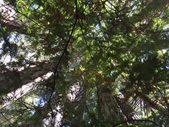 IMG_0500_Redwood POV