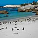Penguins beach life by werner boehm *