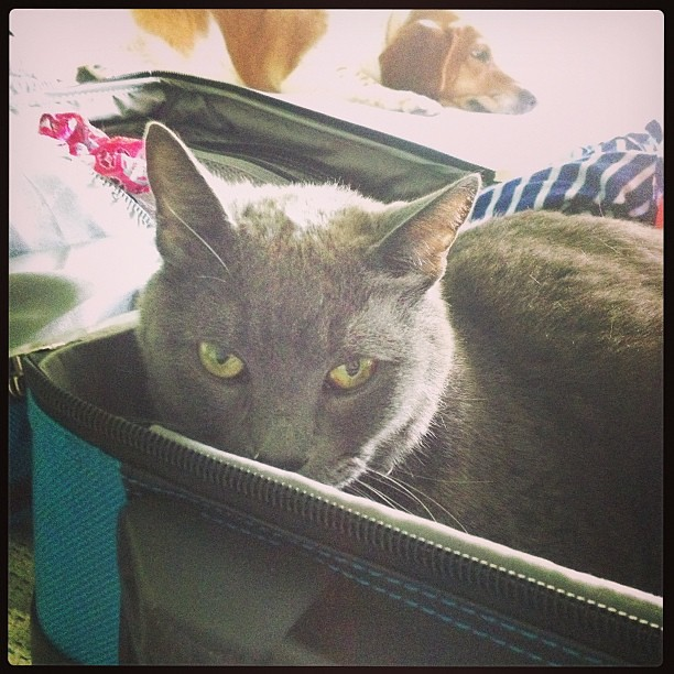 You can't forget this step of packing. #catsofinstagram
