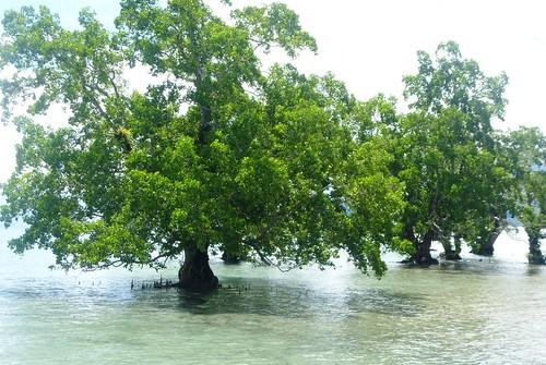 Moluques13-Ambon-Nord-Hila (55)