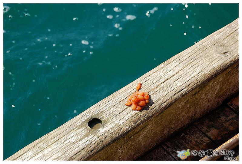 2013元貝休閒漁業_56