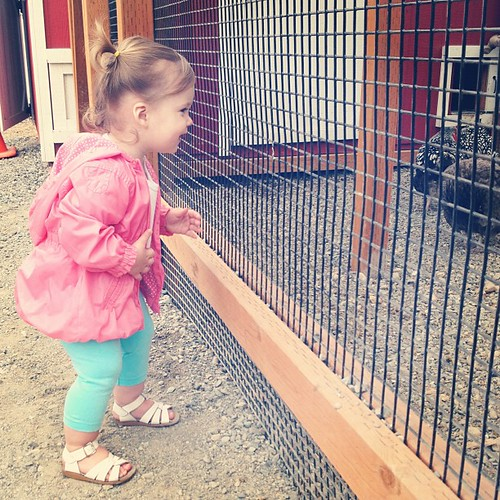 Claire meets chickens.