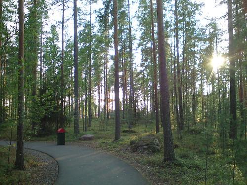 sun mobile forest finland path bin kouvola солнце лес дорожка tykkimäki урна финляндия