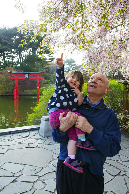 A family admires the spring cherry blossoms in the Japanese Hill-and-Pond Garden. Photo by Caroline Voagen Nelson.