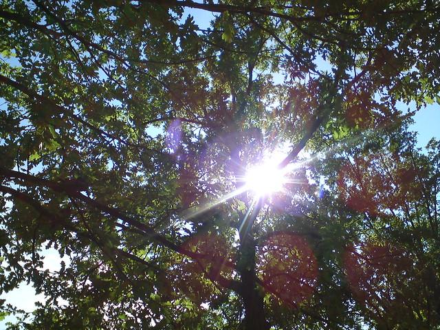 Лучи солнца // Sun rays