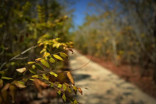 leaves trail by Rey Cuba