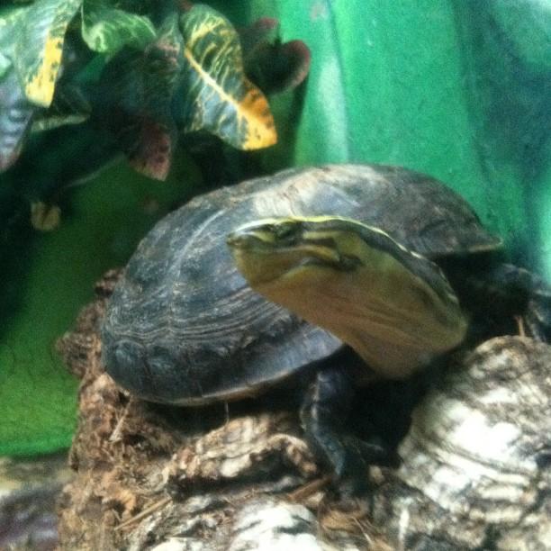 #photoadayalbsummer  : world record for James - 43 turtles!