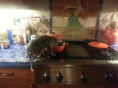 Nerissa Pre Washes the Mashed Potato Pot