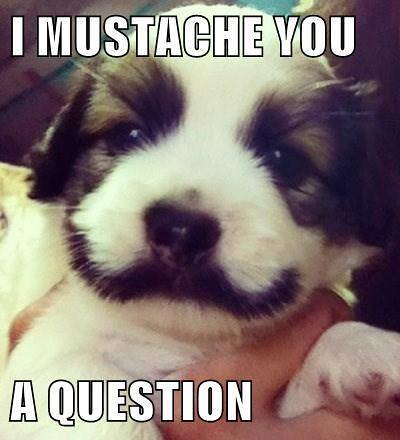 i have a question dog - photo #3