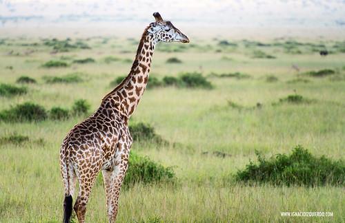 Kenia - Masai Mara 24