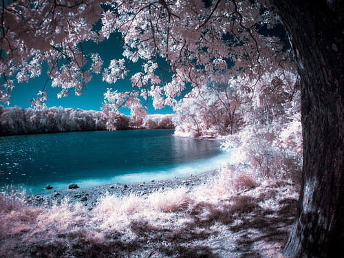 Autumn Lake View - IR by Painted Light Studio (hardpan photo)