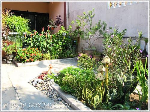 Our garden beauties at the frontyard, October 31 2013