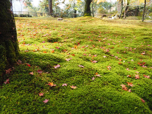 神護寺 地蔵院 苔と紅葉
